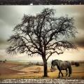 Pferdemarsch