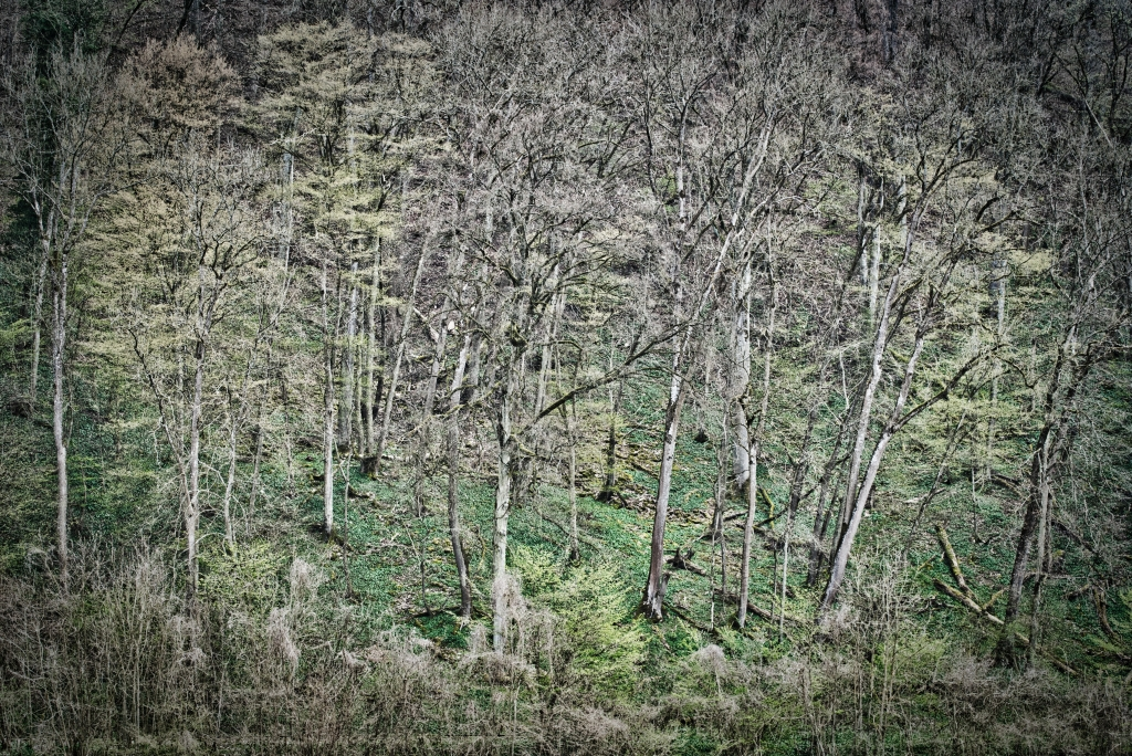 Wald-am-Hang