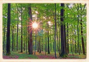 Wald im Licht4c-l