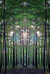 Wald_Spiegel