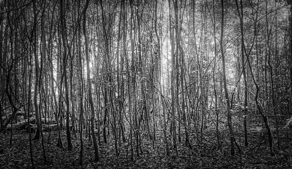 Wald-Jungholz