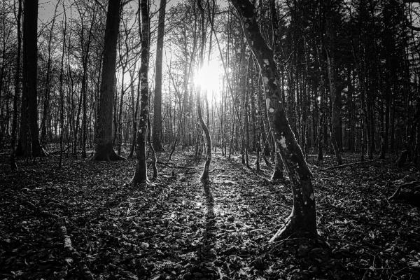 Wald-im-Licht