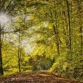 Herbstwald-im-Gegenlicht