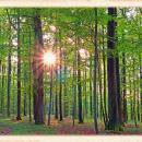 Wald im Licht