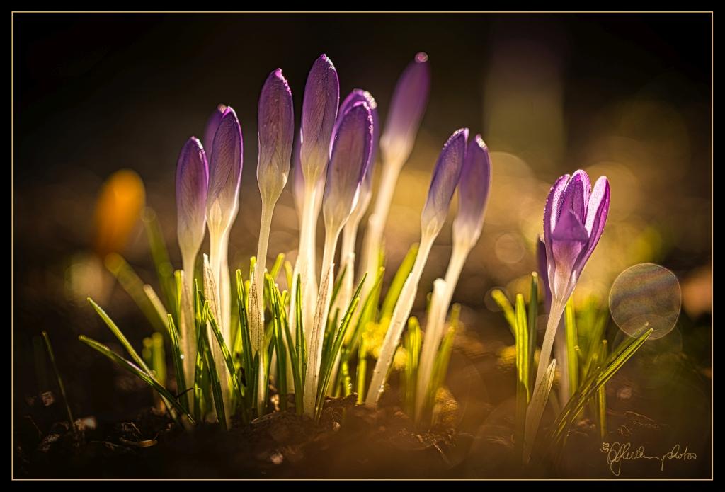 violette Gruppe