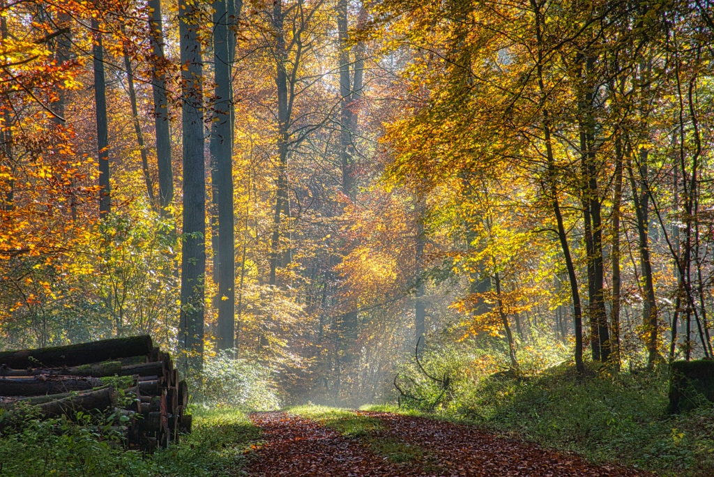 Waldweg1K